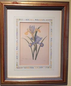 Rare Limited Ed  Print Natural History Museum Fairest Flowers Redoute - Iris