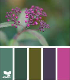 Design Seeds: Take a photo and it will give you a palette to match. Great for just browsing and inspiration!