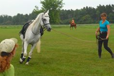 How to lunge your #horse successfully ... even if he won't lunge. #myhorsewontlunge #confidenthorsemanship