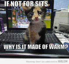kitty logic Source by leeani videos wallpaper cat cat memes cat videos cat memes cat quotes cats cats pictures cats videos I Love Cats, Crazy Cats, Cute Cats, Adorable Kittens, Cat Fun, Baby Animals, Funny Animals, Cute Animals, Wild Animals