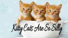 AWWW, Kitty Cats Are So Silly Kitty Cats, Kittens, Cats Meowing, Funny Things, Cute, Cute Kittens, Kitty, Fun Things, Kawaii