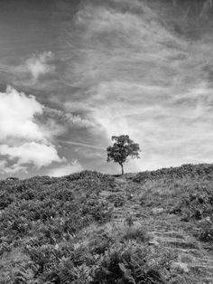 Tree on a hill by Steve Hall on 500px