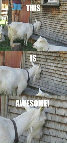 funny-animal-memes-006-011.jpg (600×1269)