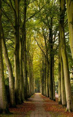 Alley (Wassenaar, Netherlands) by Roman Boed