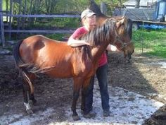 Willow is an adoptable Pony Pony in Omemee, ON. Willow is a Hackney filly born Oct 12, 2009, fortunately we were able to outbid the man who was going to put her and another yearling in the freezer to ...