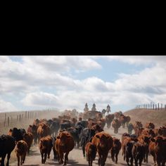 Nothing like a good ole fashion cattle drive Cattle Drive, Ranch Life, Cowboy And Cowgirl, Good Ole, Rodeo, Westerns, Camel, Animals, Fashion