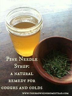 Pine needles are loaded with vitamin C. Here& how to create a natural syrup to combat coughs and colds. Pine needles are loaded with vitamin C. Heres how to create a natural syrup to combat coughs and colds. Natural Cough Remedies, Cold Remedies, Homeopathic Remedies, Health Remedies, Natural Cures, Healing Herbs, Medicinal Herbs, Natural Healing, Natural Medicine