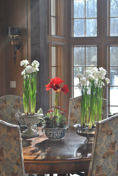 Paperwhites & Amaryllis - must haves in my Christmas decor