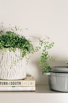 How to Style Kitchen Shelves with Zola and Ginny Branch