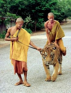 Monks...  get off the tiger.