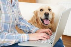 11 Best Office Dog images in 2018 | Dogs, Cute Dogs, Dogs