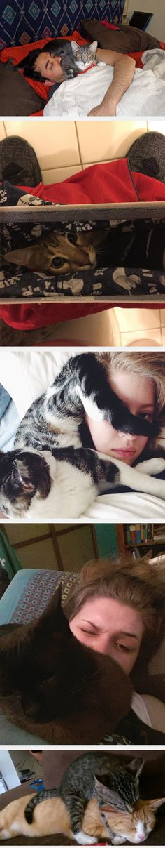 """Cats don't know the definition of """"personal space,"""" and I can tell you from experience that dogs don't know the meaning of it either. I would know. I have a dog that likes to stick her ass in my face whenever I'm petting her."""