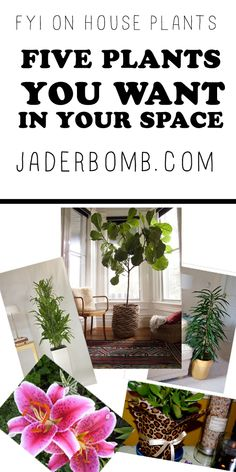Five Plants to IMPROVE your HEALTH - WWW.JADERBOMB.COM