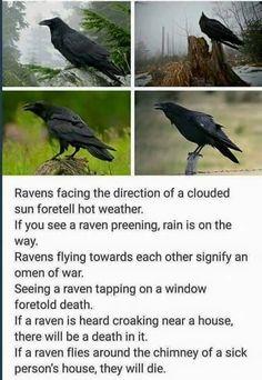 Raven points of interest