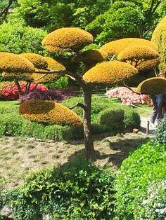 Jardin Maulévriers