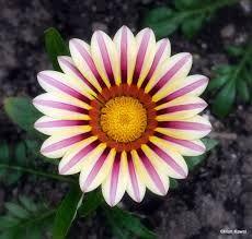 exotic flowers -