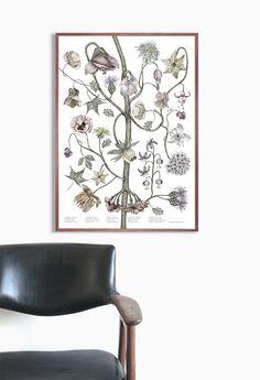 illustration/ FLOWERS