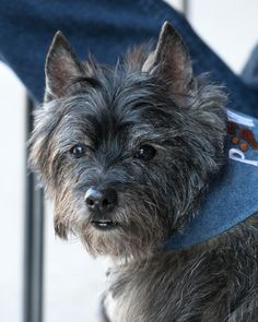 Col. Potter Cairn Rescue Network: Sunday Sweets Torran - what a handsome boy!!!
