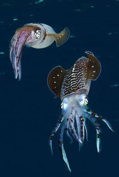 See the NOVA special Underwater Creatures, Underwater Life, Underwater Photos, Ocean Creatures, Underwater Photography, Film Photography, Street Photography, Landscape Photography, Nature Photography
