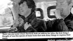 Burton Burton Bailey - biology majors and Sherlock Sherlock Fandom, Sherlock Holmes, Sherlock Cumberbatch, Biology Major, I Dont Have Friends, Ninth Doctor, Film Books, Geek Out, Johnlock