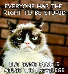 18 Times Grumpy Cat Said Exactly What He Thinks Of Stupid People Source by videos wallpaper cat cat memes cat videos cat memes cat quotes cats cats pictures cats videos Grumpy Cat Quotes, Funny Grumpy Cat Memes, Funny Cats, Funny Memes, Funny Quotes, Grumpy Cat Images, 9gag Funny, Funny Captions, Funny Animal Jokes
