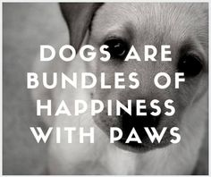 Dogs are bundles of happiness with paws. #PetPoolWarehouse #SundayMotivation