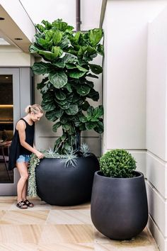 Hey everyone! landscape design These landscape garden are perfect for thelandscape design, landscape design front of house, landscape design plans, landscape design backyard, landscape design ideas so you need to try them out! Outdoor Plants, Outdoor Gardens, Indoor Outdoor, Large Outdoor Planters, Big Planters, Black Planters, Indoor Hanging Plants, Ficus Tree Indoor, Garden Art