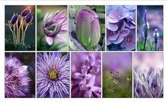 Flowers of purple tones