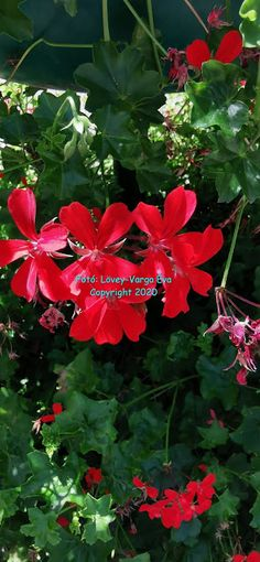 Bluerose Purpleflower Archeologist Chemist Blog: Üdvözlet! Chemist, Plants, Blog, Blogging, Plant, Planting, Planets