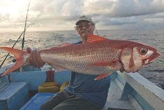 So you think you want to fish in Fiji? Fishing In Fiji, My Perfect Wedding, Ordinary Lives, Dreams