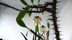 Aloe Vera Aloe Vera, Plants, Pictures, Flowers, Plant, Planets