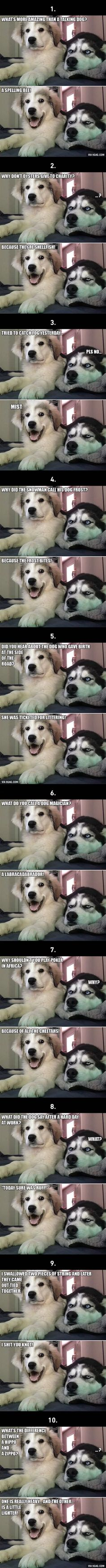 10 Best Bad Puns Dog Memes Ever is part of Puns jokes - More memes, funny videos and pics on Funny Animal Jokes, Dog Jokes, Puns Jokes, Corny Jokes, Really Funny Memes, Stupid Funny Memes, Cute Funny Animals, Funny Animal Pictures, Funny Relatable Memes