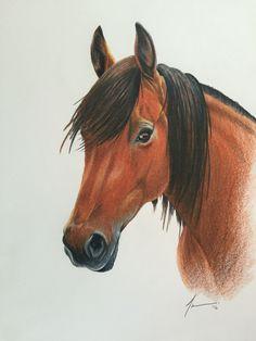 Horse by Tara Hall 2016 - Prismacolor Pencil Crayons