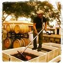 Dylan teaching interns how to do punchdowns at Sheldon Winery.
