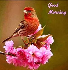 Good Morning Picture Messages, Good Morning Friends Images, Good Morning Flowers Pictures, Good Morning Massage, Good Morning Happy Sunday, Good Morning Beautiful Images, Good Morning Cards, Good Morning Photos, Good Morning Gif