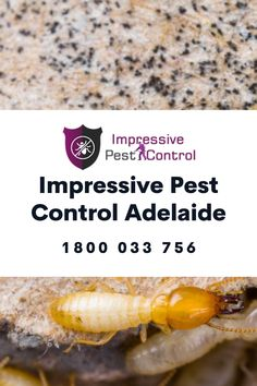Impressive Pest Control Adelaide is a professional pest control service provider. Our reputation in Adelaide lies on our quality pest control solutions and unmatched customer service. Give us a chance to deliver the best pest control solutions like Cockroaches Control , Ants Control etc. Call us on 1800 033 756 today. Best Pest Control, Pest Control Services, Cockroach Control