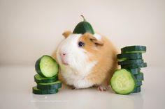 guineapiggies: (via Bret P. Michaels's Photos)