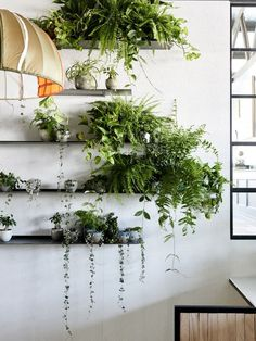 Detail from the indoor garden at The Design Files Open House The plant selection, curated by Loose Leaf with Georgina Reid of The Planthunter, includes hoyas, string of hearts, devils ivy and various ferns. Photo – Eve Wilson for The Design Files. Indoor Plant Shelves, Indoor Plant Wall, Plant Wall Decor, Indoor Plants, Potted Plants, Plants On Shelves, Green Shelves, Wall Garden Indoor, Plantas Indoor