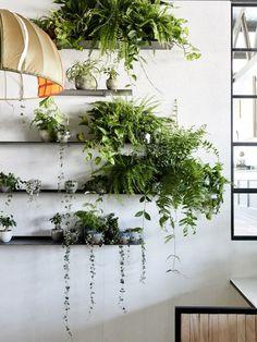 Un coin de verdure chez soi, des plantes tombantes sur des étagères