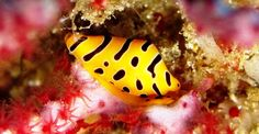 Read about Thailand's best dive site : Richelieu rock. Daily liveaboards and daytrips http://www.richelieu-rock-diving.com/