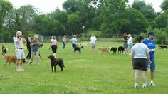 Image result for Pets at the Park