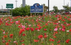 Town of Cape Carteret - Town of Cape Carteret NC Carteret County, North Carolina Coast, Parks And Recreation, Cape, Flowers, Mantle, Cabo, Royal Icing Flowers, Flower