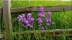weidezaun Flower Fence, Garden Trees, Nature Pictures, My Favorite Color, Beautiful Landscapes, Natural Wood, Planting Flowers, Pergola, Herbs