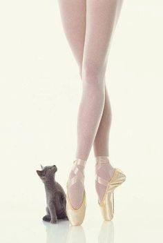 Ballet and Cat
