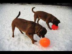 Keshet Kennels/Rescue - Winter Moments