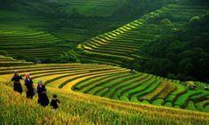 How is Sapa, Vietnam on Sapa tours ?