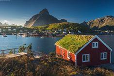 Лофотенские о-ва. Норвегия . Посетить китовое сафари и увидеть самый опасный водоворотом в мире