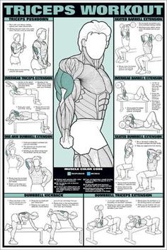 trainingsplan muskelaufbau Biceps and Forearm Professional Fitness Workout Wall Chart Poster - Fitnus Posters Inc – Sports Poster Warehouse Gym Workout Tips, Weight Training Workouts, Ab Workout At Home, Workout Challenge, Fun Workouts, At Home Workouts, Wall Workout, Gym Workout Chart, Studio Workouts