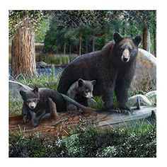 Rustic Black Bear Cubs Shower Curtain Bring A Touch Of The Great Outdoors Into Your Home With This Measures X Perfect For