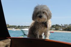 dot chillin on the boat
